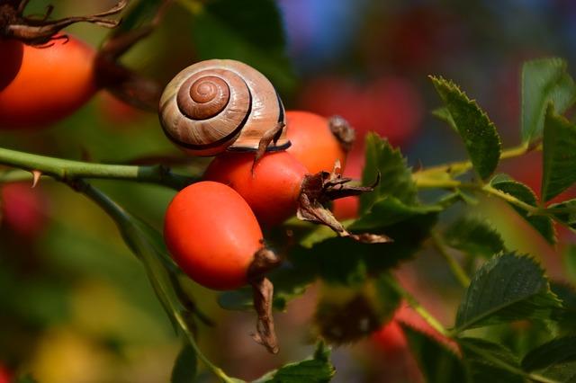 samle dine egne frø