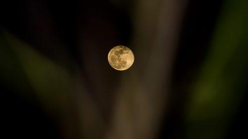 fullmånefeiring